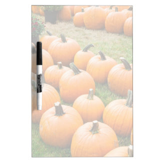 Pumpkins for Sale at a Farmer's Market Dry Erase White Board