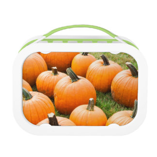 Pumpkins for Sale at a Farmer's Market Lunch Box