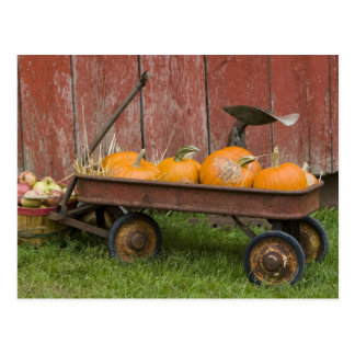 Pumpkins in old wagon postcard
