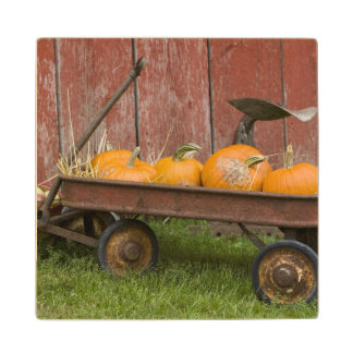 Pumpkins in old wagon wood coaster