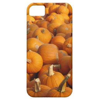 Pumpkins iPhone 5/5S Cover