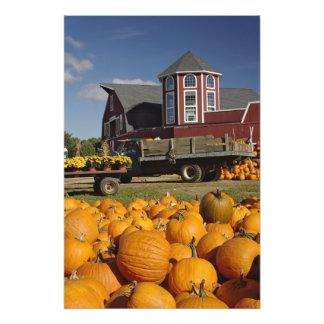 Pumpkins on farm in autumn near Concord, 2 Art Photo