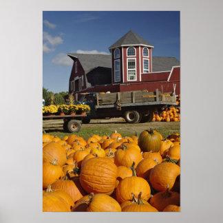 Pumpkins on farm in autumn near Concord, 2 Poster