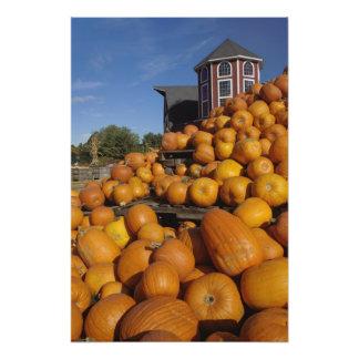Pumpkins on farm in autumn near Concord, Photographic Print