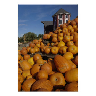 Pumpkins on farm in autumn near Concord, Poster
