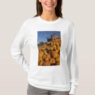Pumpkins on farm in autumn near Concord, T-Shirt