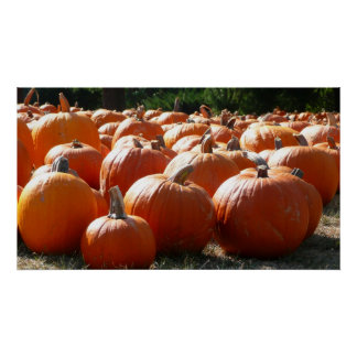 Pumpkins Photo for Fall, Halloween or Thanksgiving Poster