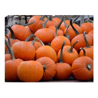 Pumpkins, Pumpkins, and More Pumpkins, Fall Postcard