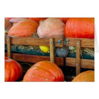 Pumpkins & Squash Greeting Card