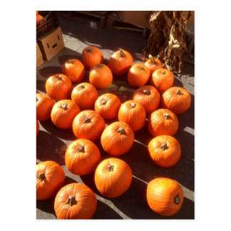 Pumpkins, Unions Square farmers market, NYC Postcard