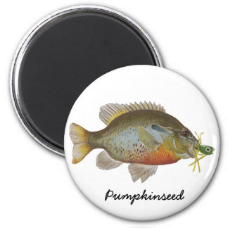 Pumpkinseed 6 Cm Round Magnet