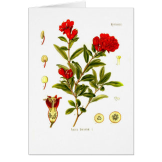 Punica granata (pomegranate) card