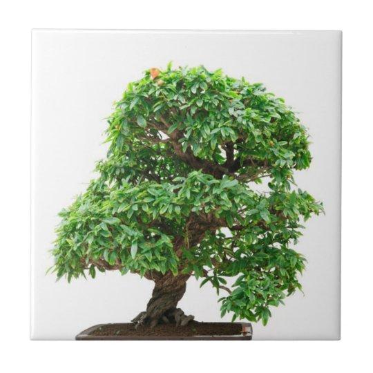 Punica Granatum bonsai tree Small Square Tile
