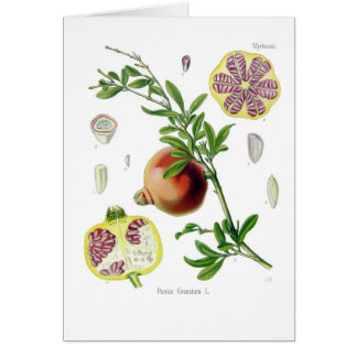 Punica granatum (Pomegranate) Card