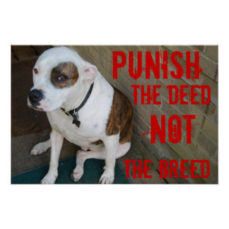 Punish the deed ~ Not the breed Poster