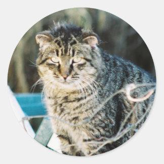 Punk Rock Feral Tom Cat Round Sticker