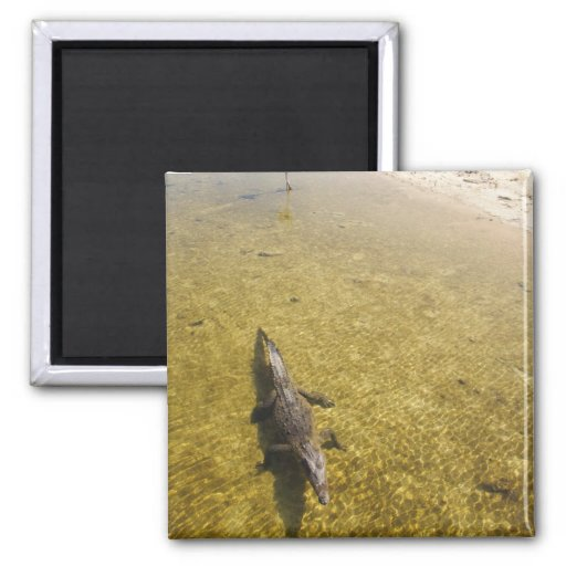 Punta Sur Saltwater Crocodile Cozumel Magnet