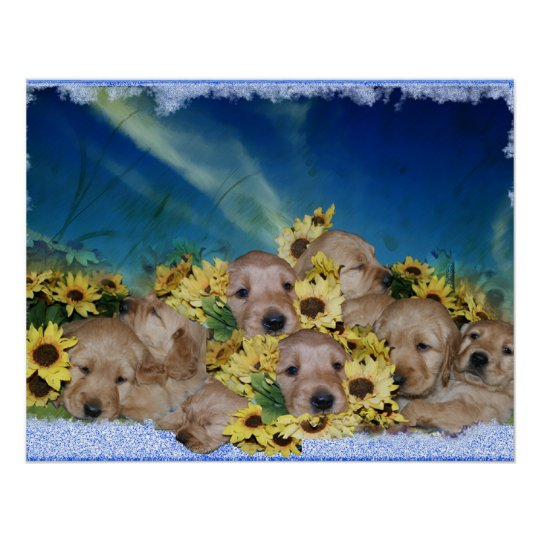 PUPPIES AND FLOWERS - GOLDEN RETRIEVER POSTER