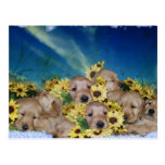 PUPPIES AND FLOWERS (GOLDEN RETRIEVERS) POSTCARD