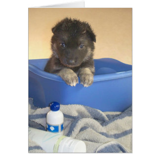 Puppies Bath Time Greeting Card
