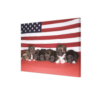 Puppies in front of an american flag canvas print