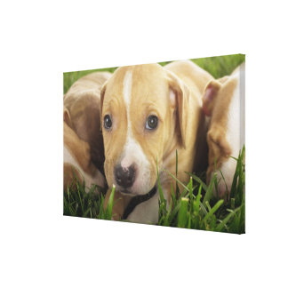 Puppies laying in grass canvas print