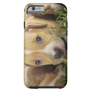 Puppies laying in grass tough iPhone 6 case