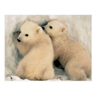Puppies of Polar Bear Postcard