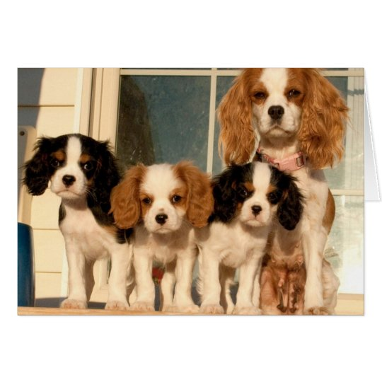 Puppies on the Porch Card