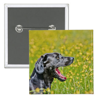 Puppy 16 Months 15 Cm Square Badge