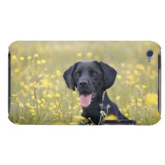 Puppy 16 Months 2 Barely There iPod Cases
