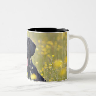 Puppy 16 Months 2 Two-Tone Coffee Mug