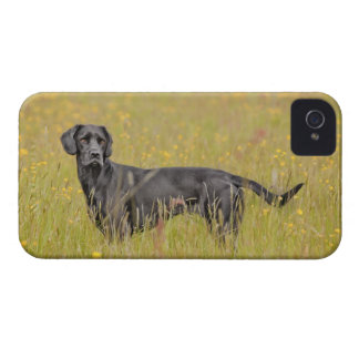 Puppy 16 Months Case-Mate iPhone 4 Case
