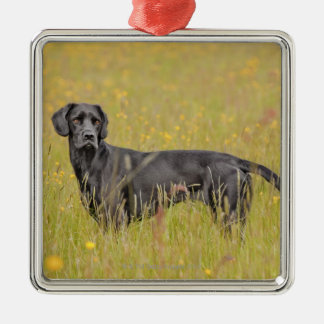 Puppy 16 Months Silver-Colored Square Decoration