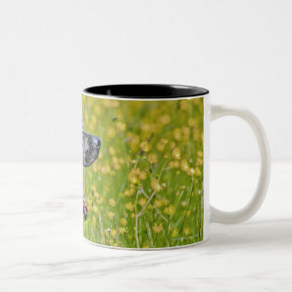 Puppy 16 Months Two-Tone Coffee Mug