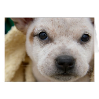 Puppy 1 card