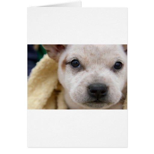 Puppy #1 card