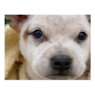 Puppy 1 postcard