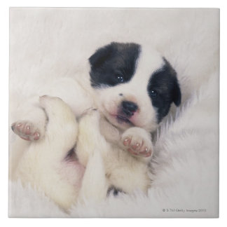 Puppy 2 large square tile