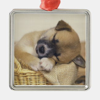 Puppy 3 christmas ornament