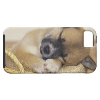 Puppy 3 iPhone 5 cover
