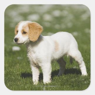 Puppy 3 square sticker