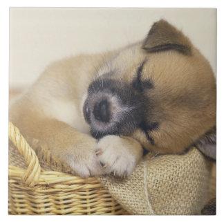 Puppy 3 tile