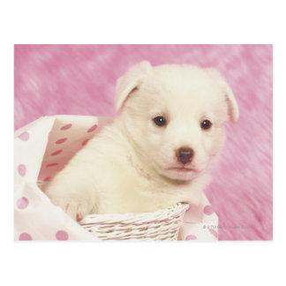Puppy 5 postcard
