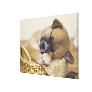 Puppy 8 canvas print