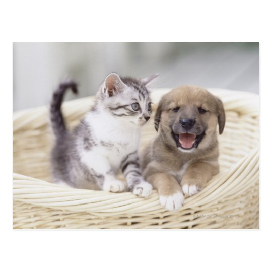 Puppy and Baby Cat Postcard
