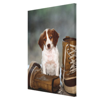 Puppy and Boots Stretched Canvas Print
