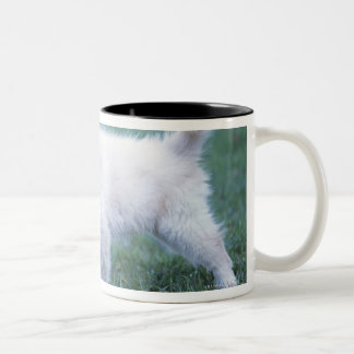 Puppy and Lop Ear Rabbit on lawn Two-Tone Coffee Mug