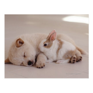 Puppy and Rabbit Postcard