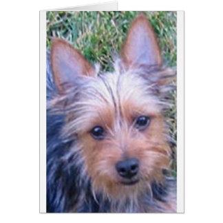 puppy australian silky terrier.png card